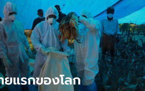 ไข้หวัดนก H5N8